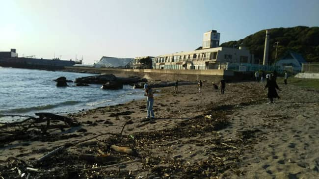 海岸で流木拾い